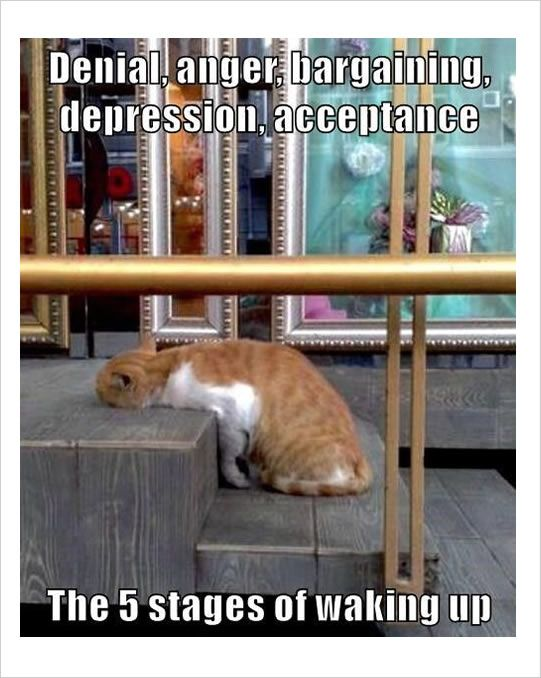 5-stages-of-waking-up-funny-meme.jpg