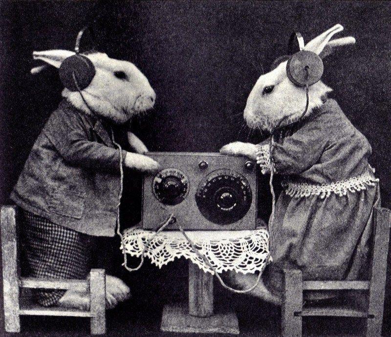 bunny-radio.jpg