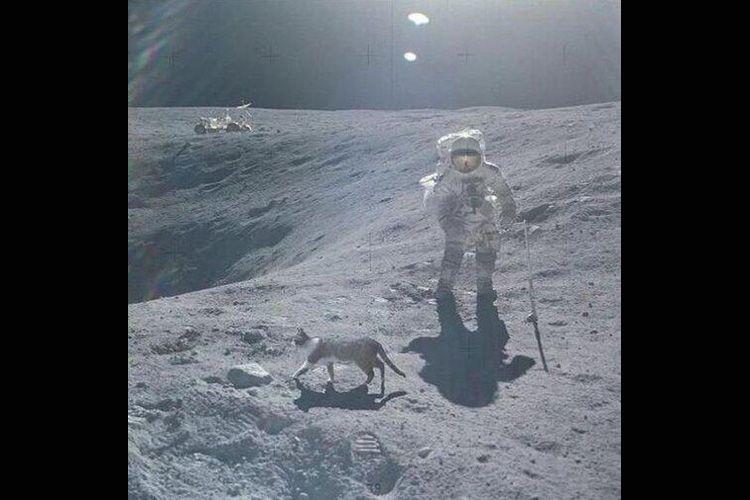 cat on da moon.jpg
