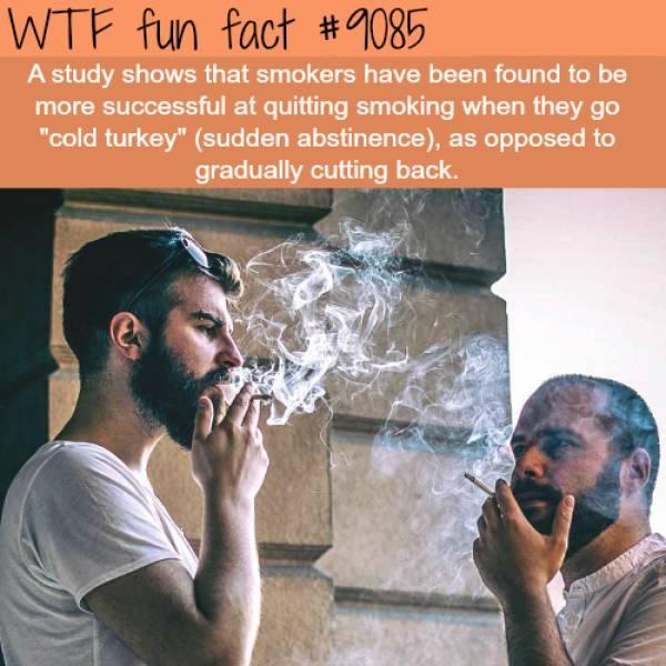 completely_random_but_still_interesting_facts_640_30.jpg