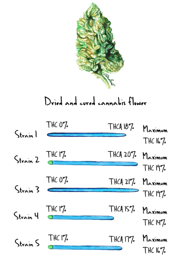 dried-and-cured-cannabis-flower.png