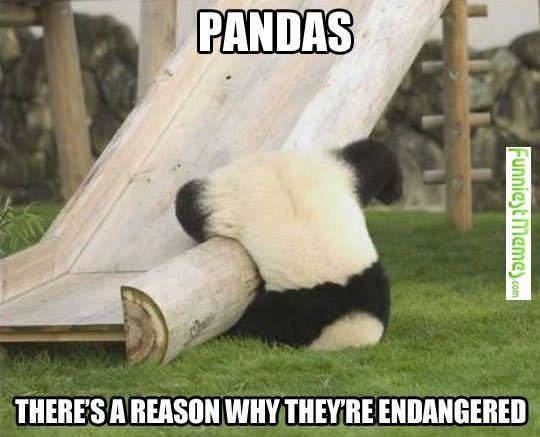 funniestmemes-com-•-you-just-got-to-love-pandas-for-all-the-stupid-things-they-do.jpg