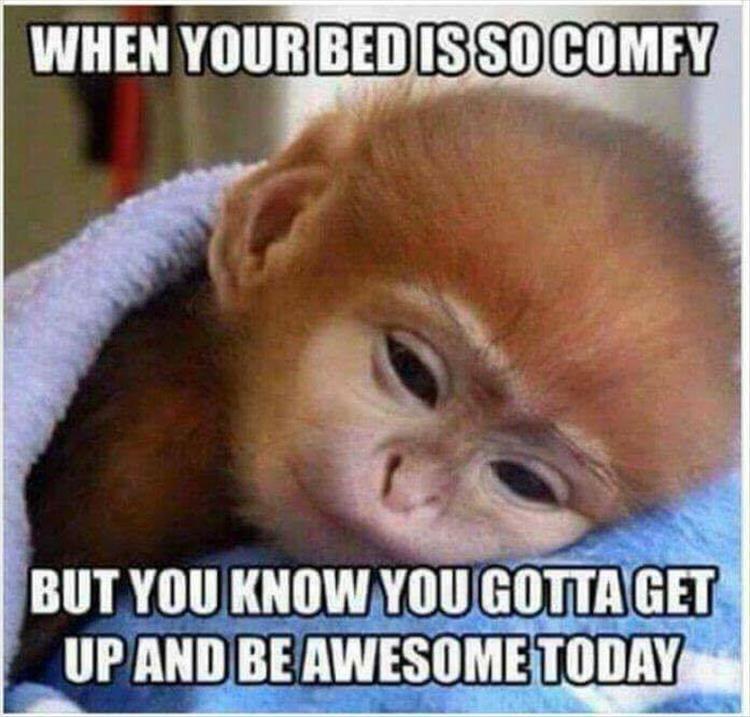 funny-good-morning-meme-for-him.jpg