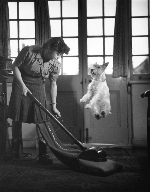 Funny vintage photos of dogs (1).jpeg
