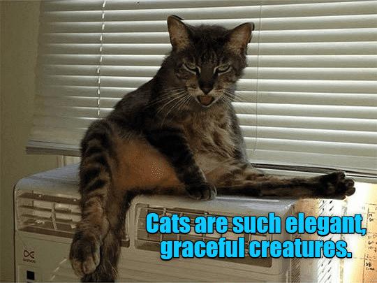 meme-elegant-cat.png