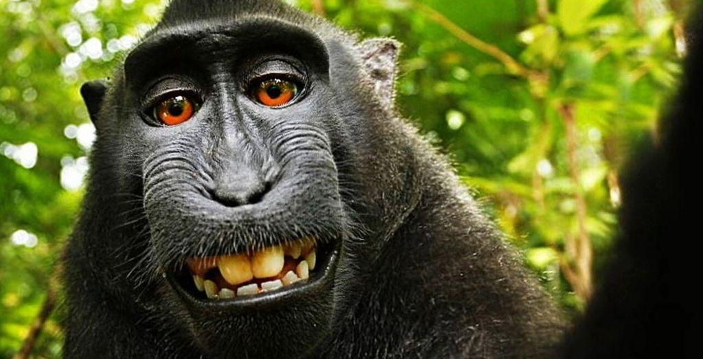 monkey-selfie.jpg