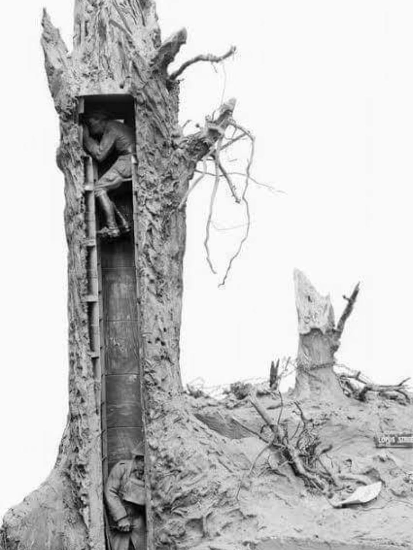 obs tree post.jpg