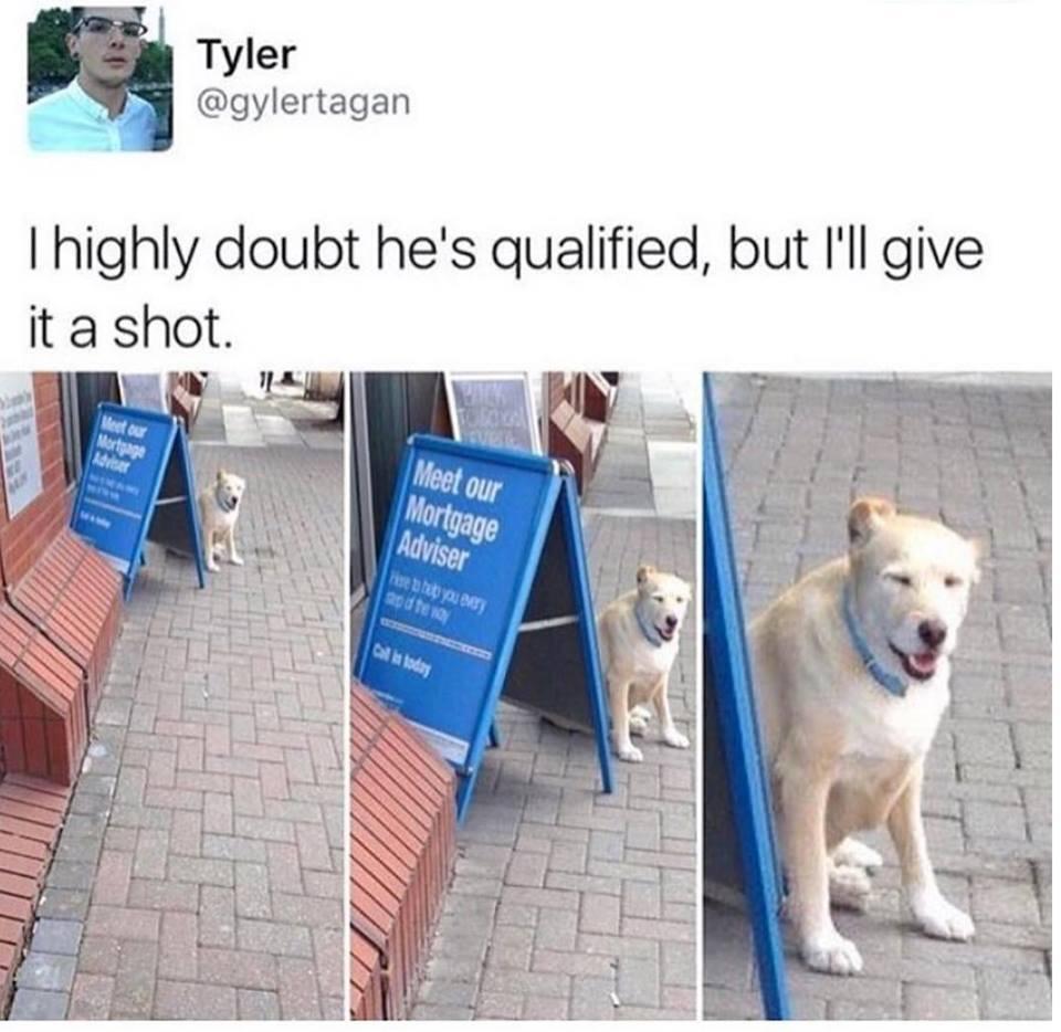 qualified.jpg