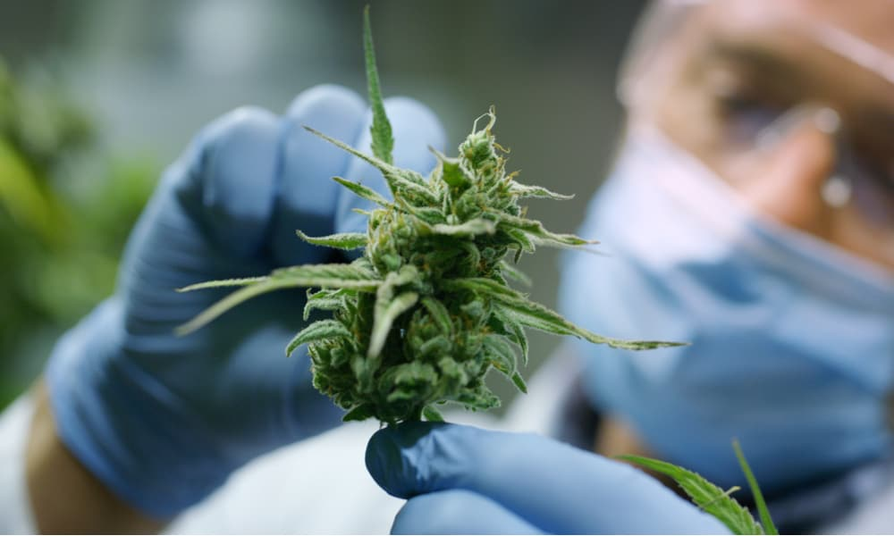 scientists-find-cannabis-compound-more-effective-aspirin-pain-relief-featured.jpg
