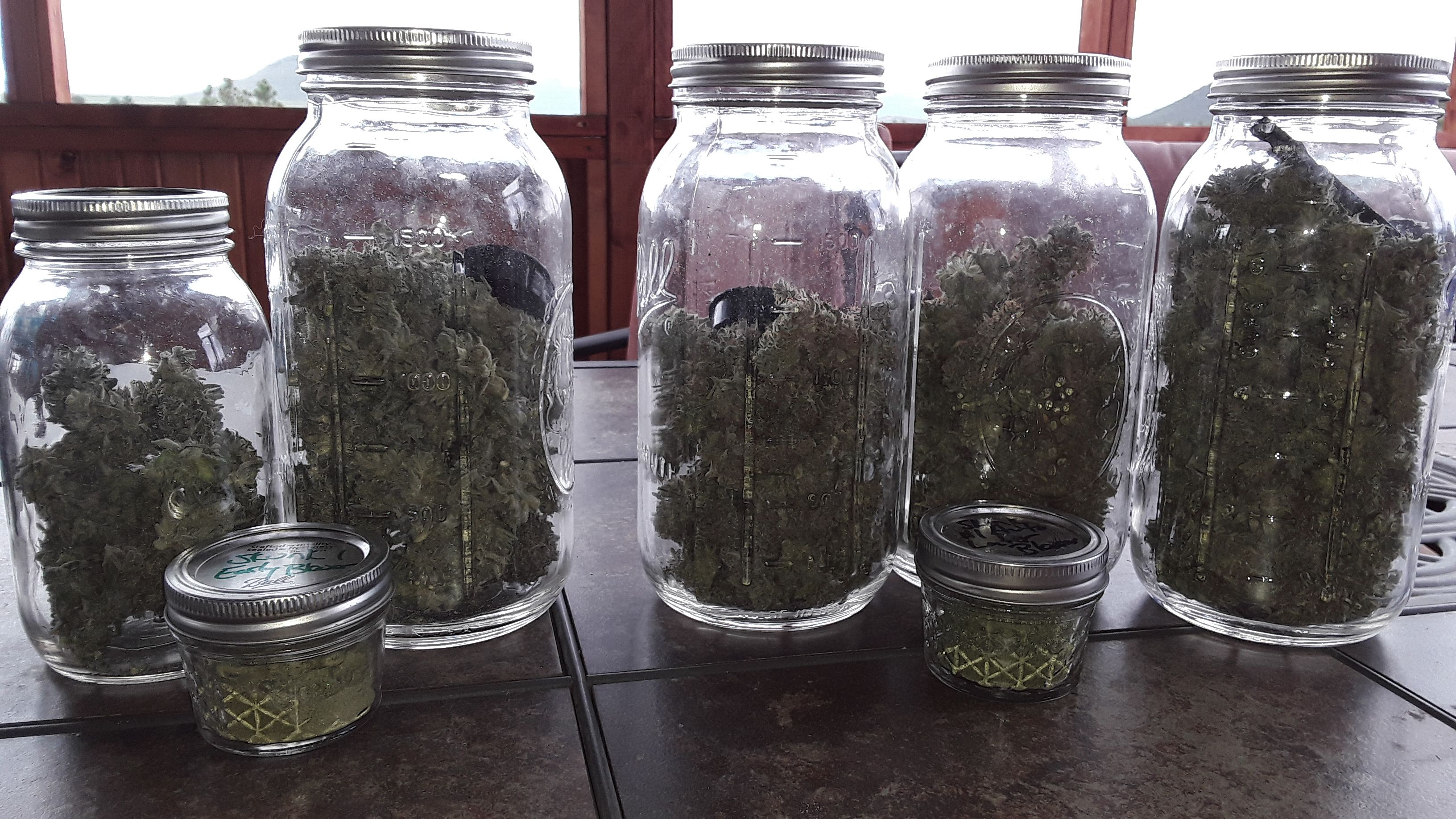sk1-1st-and-2nd-plants-harvested.jpg