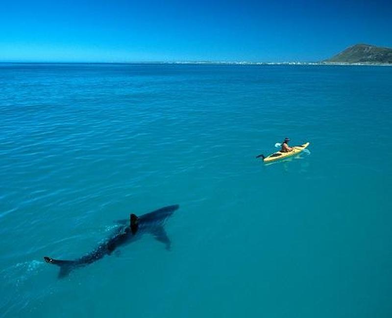 white-shark-kayak2.jpg