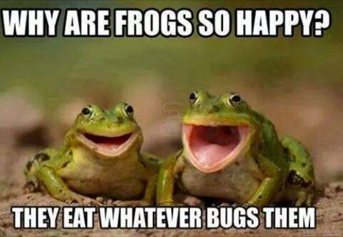 why-are-frogs-happy-memes.jpg